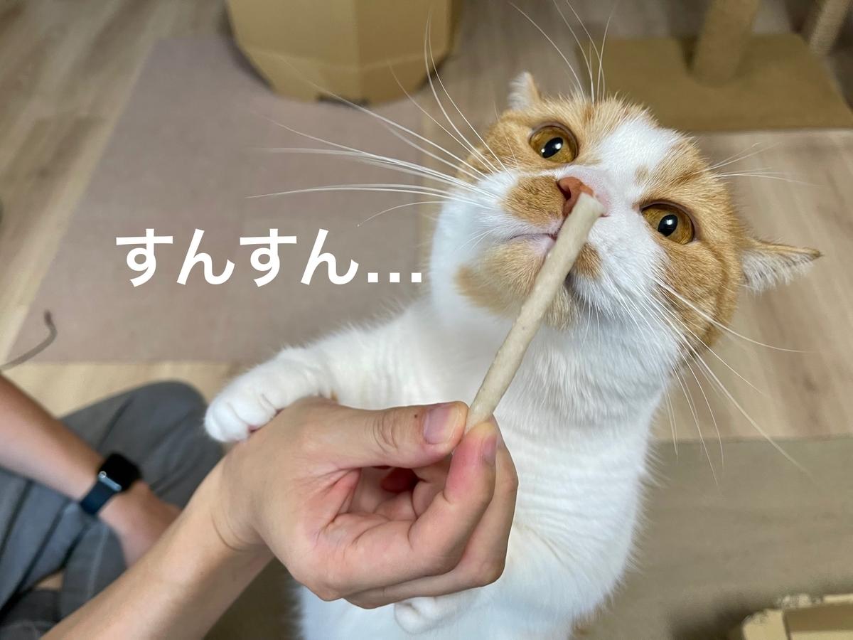 歯磨きおやつのニオイを嗅ぐるるちゃん1