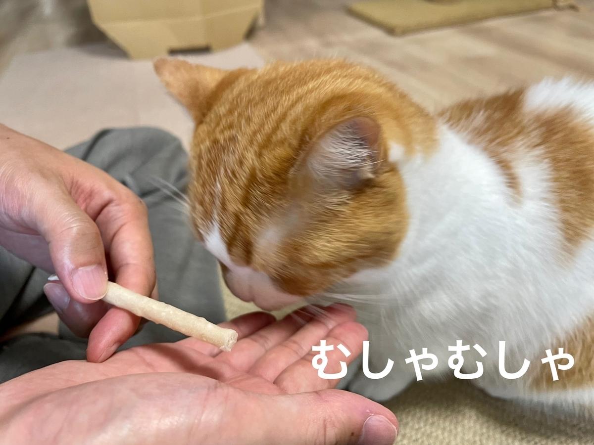 はじめての歯磨きおやつとるるちゃん3