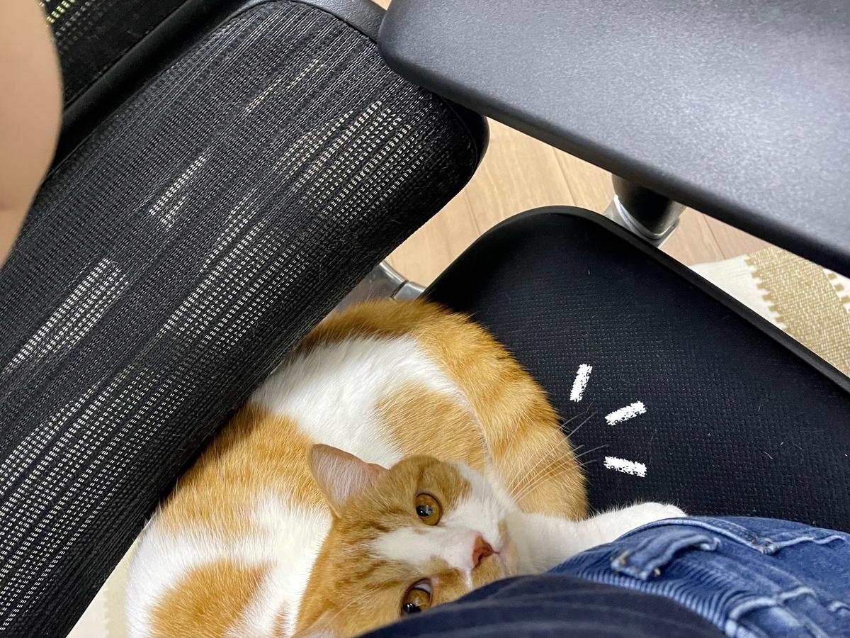 飼い主と椅子を相乗りするるるちゃん1