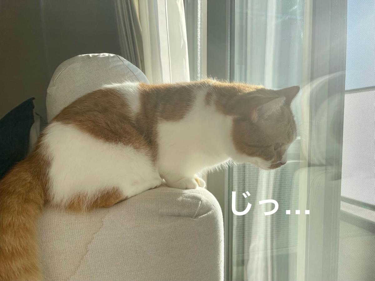 窓を眺めるるるちゃん