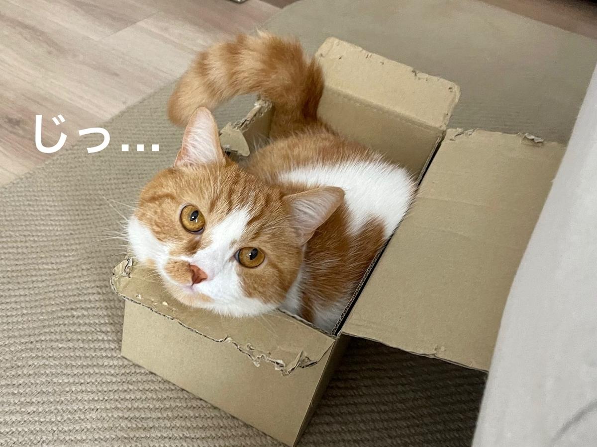 狭い箱にすっぽりおさまるるるちゃん