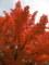 広島城での紅葉