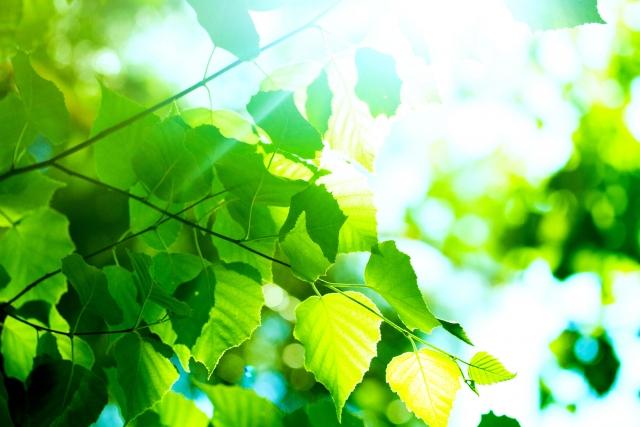 免疫力32 チャーガ茶 βグルカン 環境ホルモン 化学物質 免疫効果 環境ホルモン、化学物質から免疫力でカラダを守る!チャーガで免疫力
