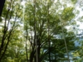 [九頭龍神社][御朱印][パワースポット]