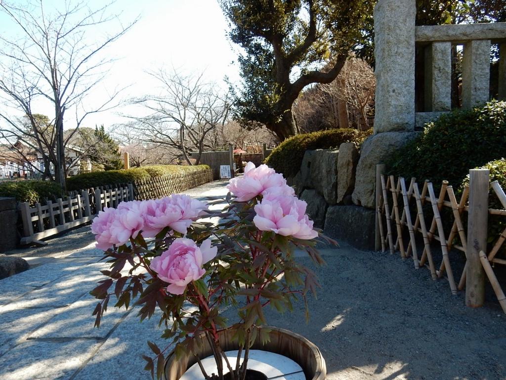 鎌倉 鶴ヶ岡八幡宮 梅 アクセス 行き方 時間 ご朱印 ご利益 ボタン 牡丹