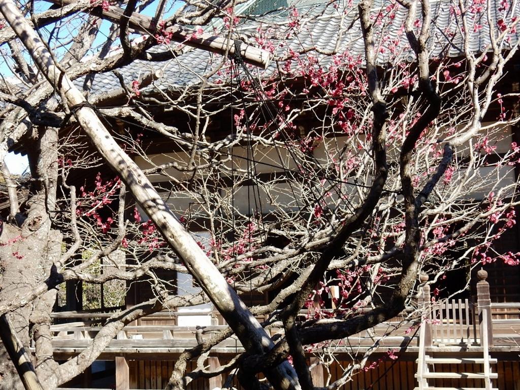 鎌倉 宝戒寺 ウメ アクセス 行き方 時間 ご朱印 ご利益 ハギ