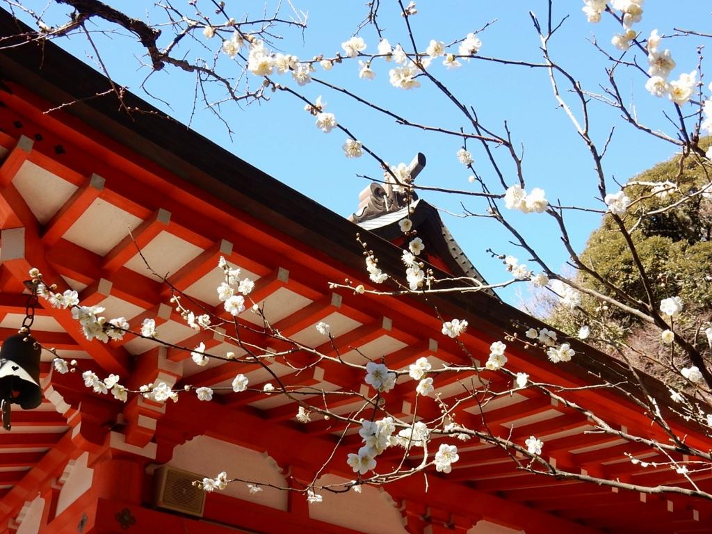 24  鎌倉 ウメ 梅 巡り kamakura 2月の鎌倉はオススメ梅の見所一杯!梅見がてらの鎌倉ご朱印ご利益参拝