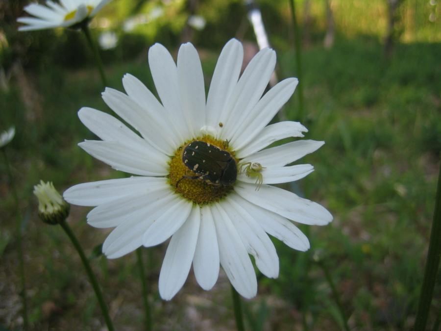 f:id:tirorinmura:20120513205705j:image
