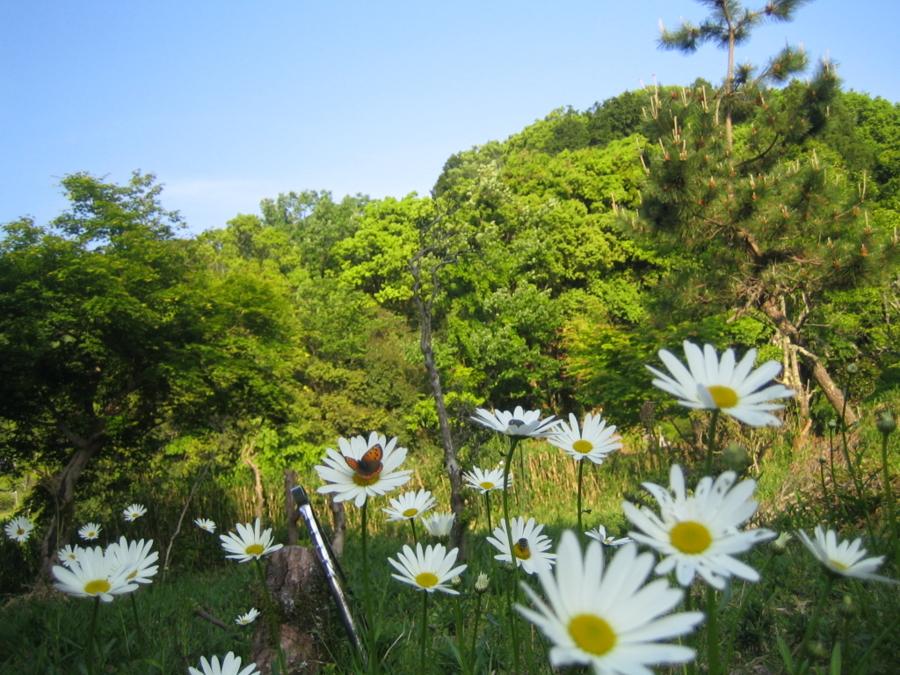 f:id:tirorinmura:20120513205725j:image