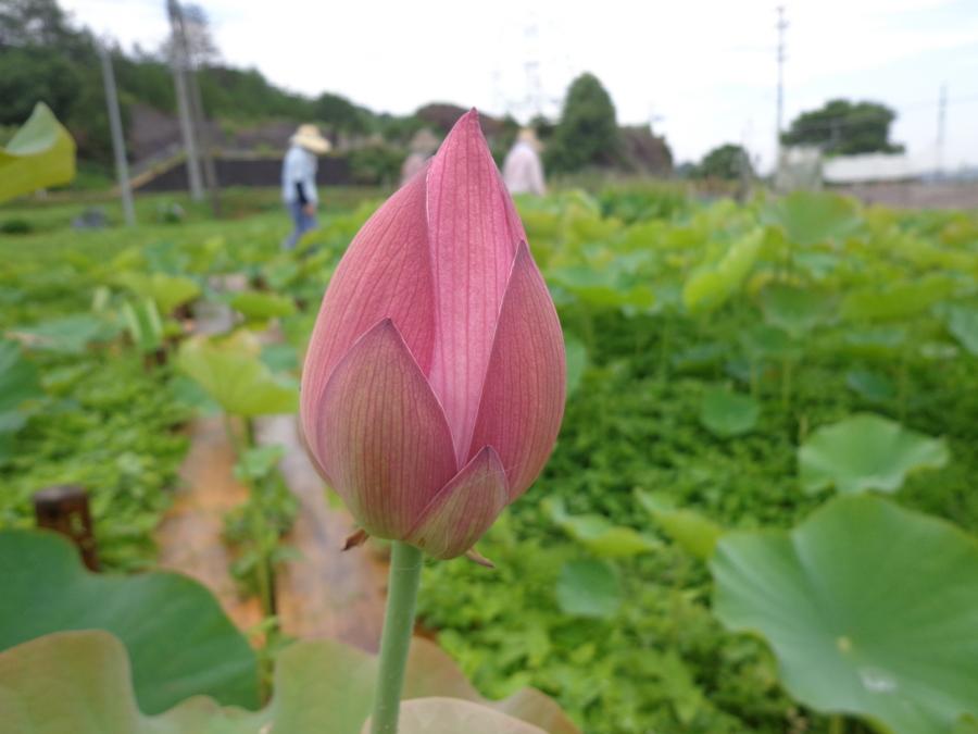 f:id:tirorinmura:20130707212258j:image:w360:left