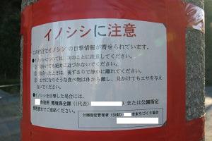 藤沢 新林公園 イノシシに注意