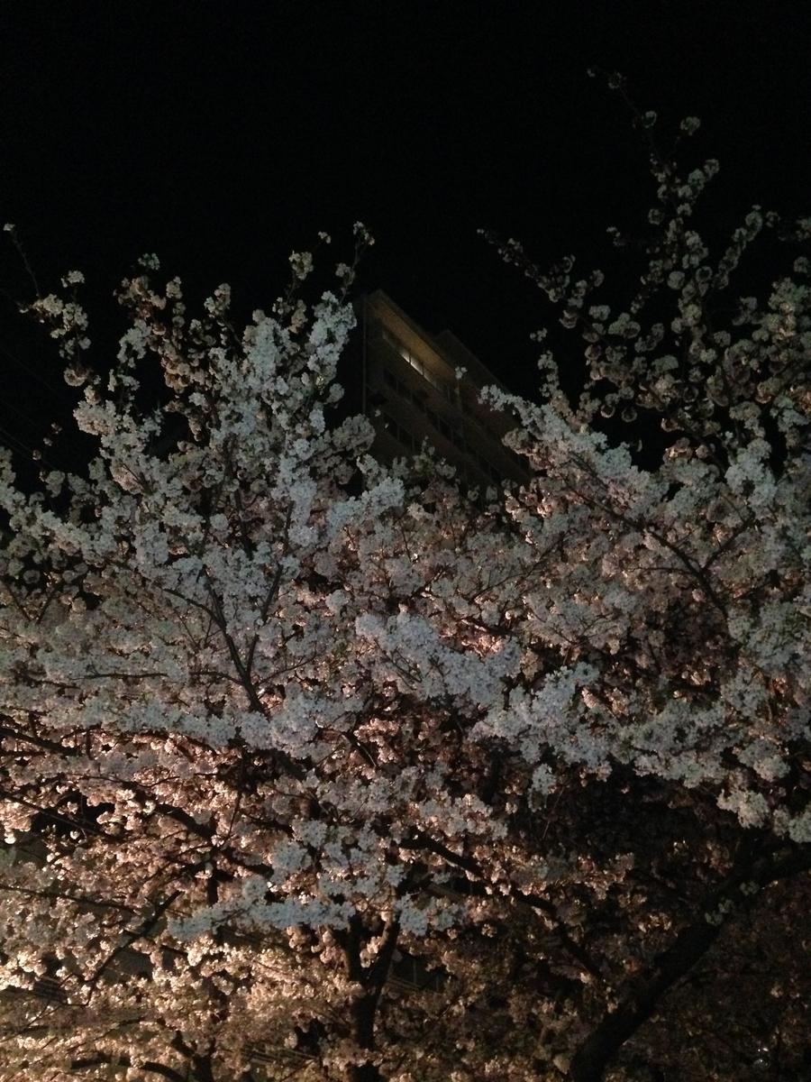 東奥田公園の桜