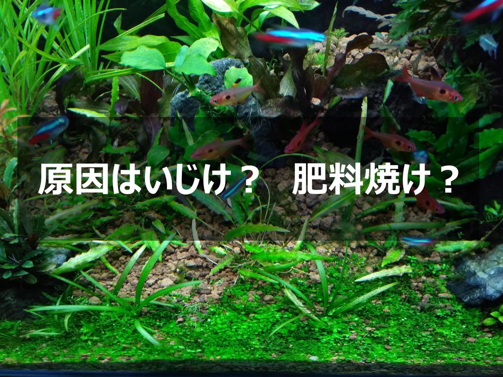 f:id:tk_maeda:20190114105856j:plain