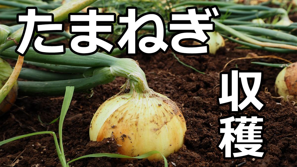 f:id:tk_maeda:20190713173858j:plain