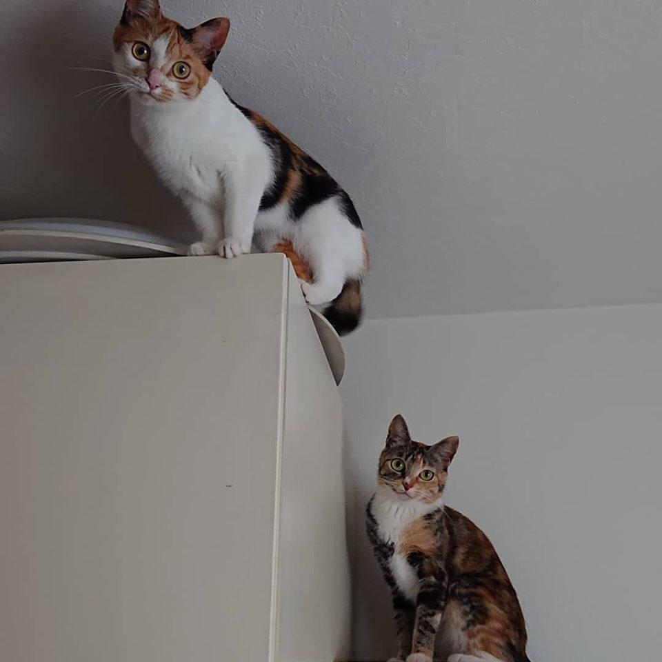 猫は高い所が大好き