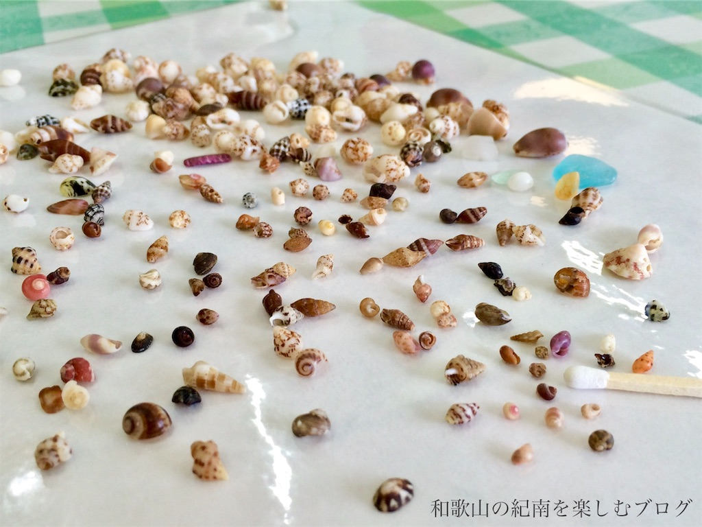 南紀白浜の貝殻(番所山ビーチ)