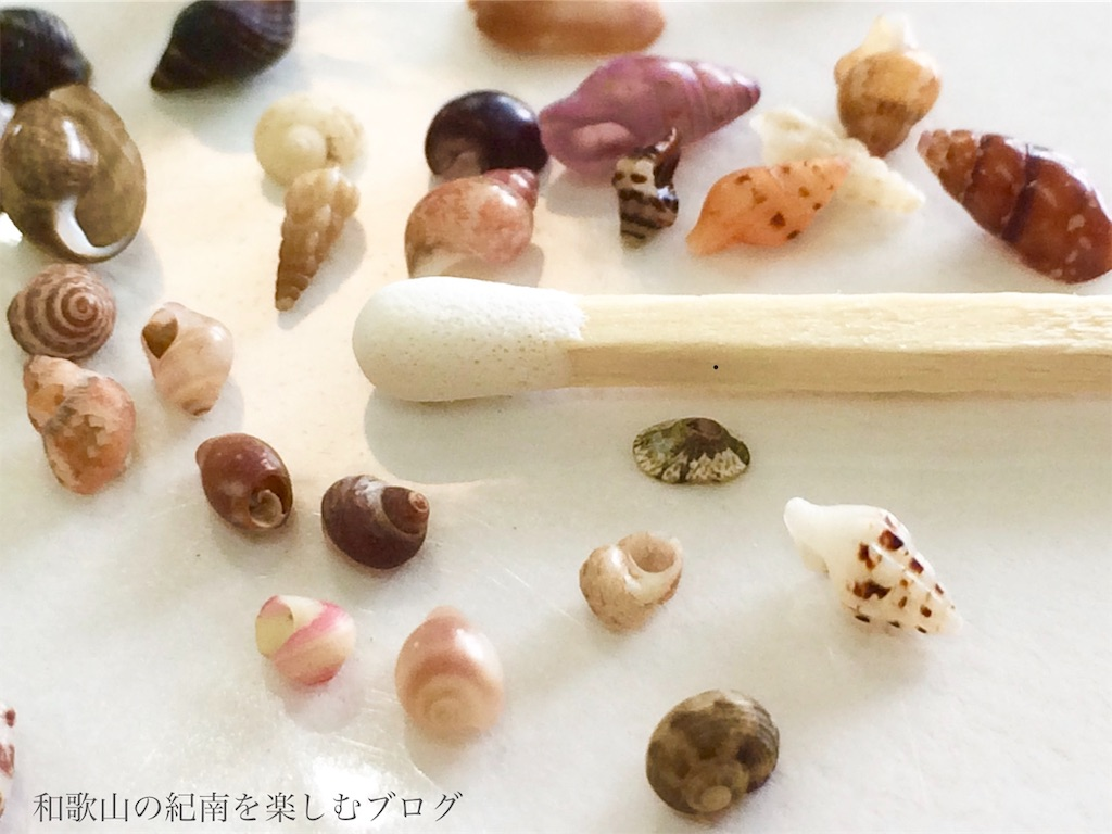 南紀白浜 貝殻 マッチ棒と比較