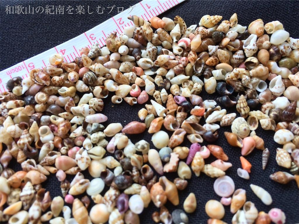 南紀白浜の貝殻