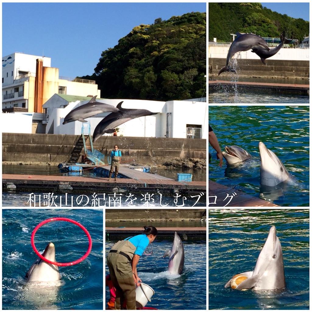 那智勝浦 紀の松島観光船 ドルフィンコース(1)