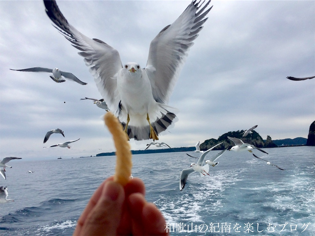 那智勝浦 紀の松島観光船 かもめ(5)