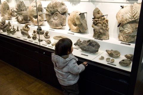 化石を物色