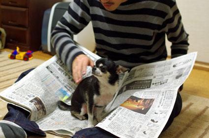 新聞紙onめゐこ