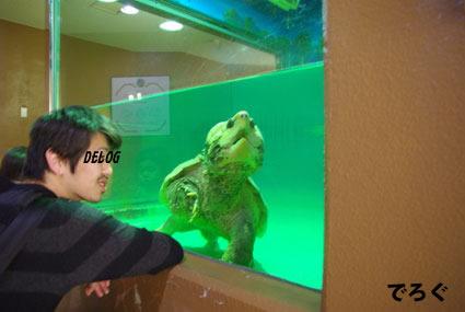 ワニガメさんこんにちは
