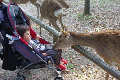 鹿とご対面