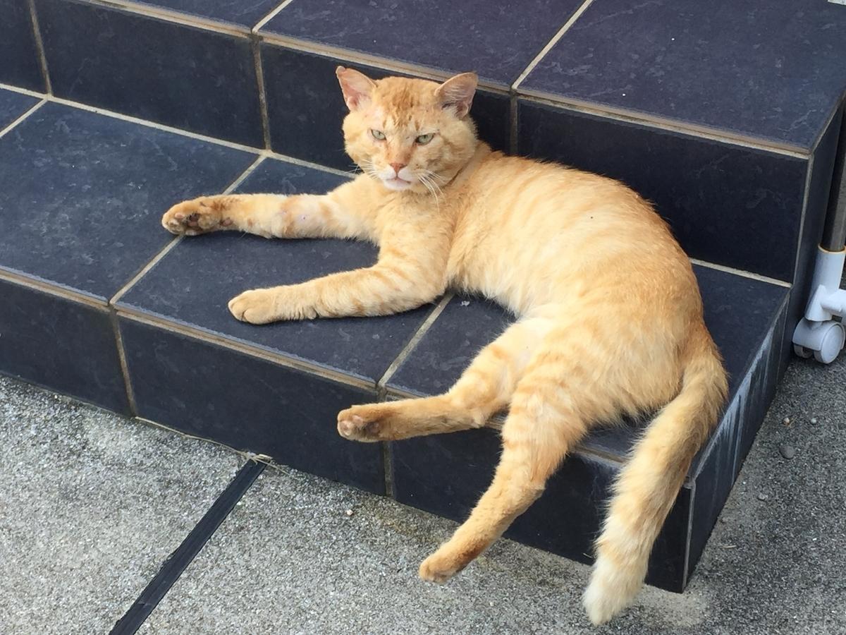 玄関前で寝ている猫