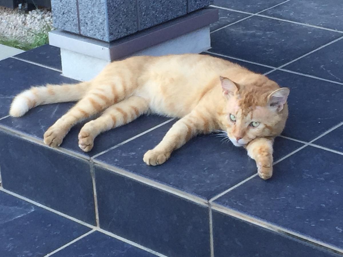 玄関前でくつろく猫