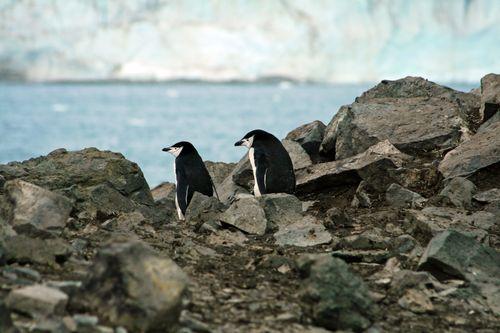 岩場のペンギン