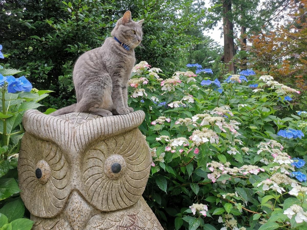 ふくろうに乗る猫