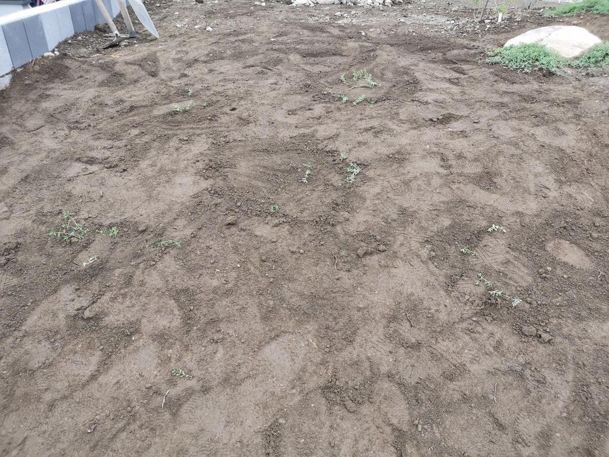 挿し木で地植えしたクリーピングタイム