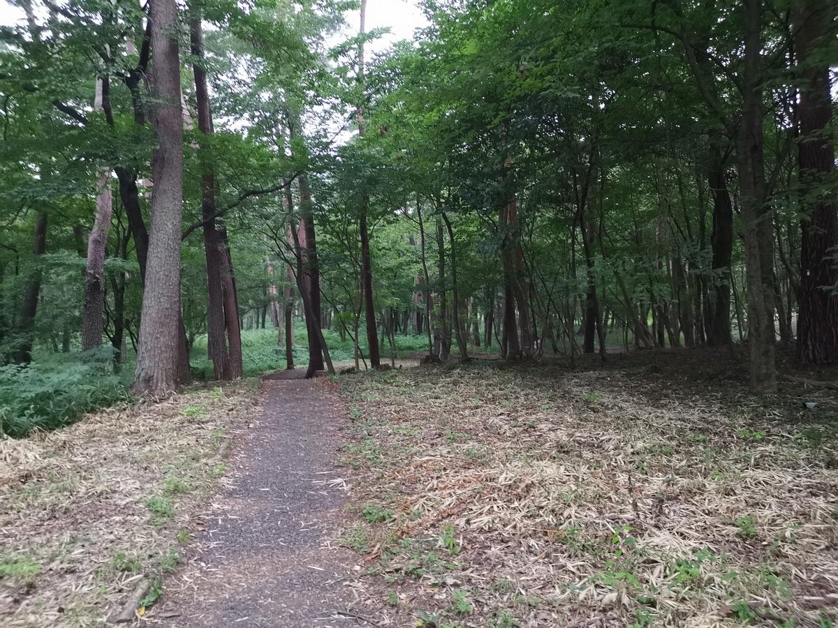 森林ウォーク