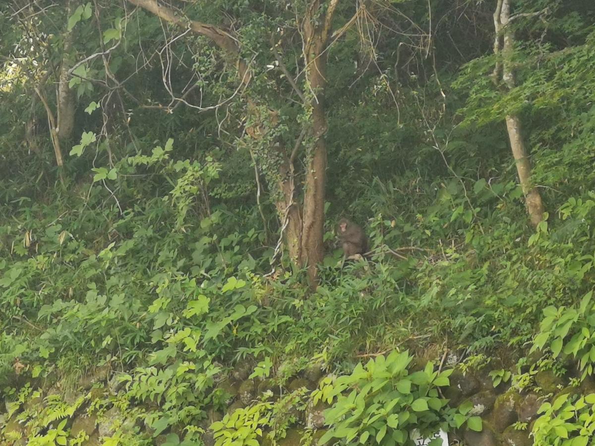 那須で見つけた野猿