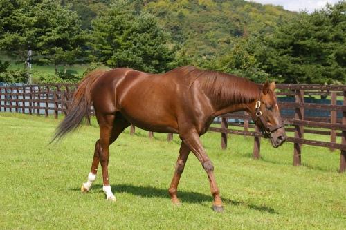 栃栗毛(とちくりげ)の馬