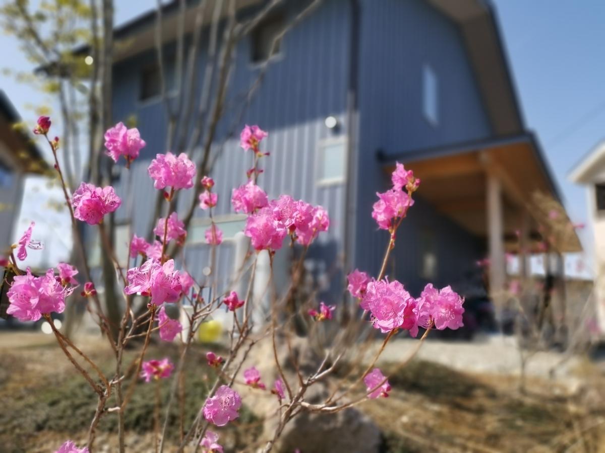 お庭で咲いたツツジ