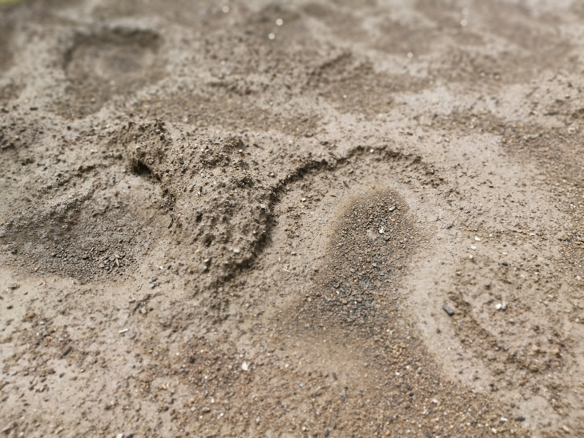 雨で固まった土