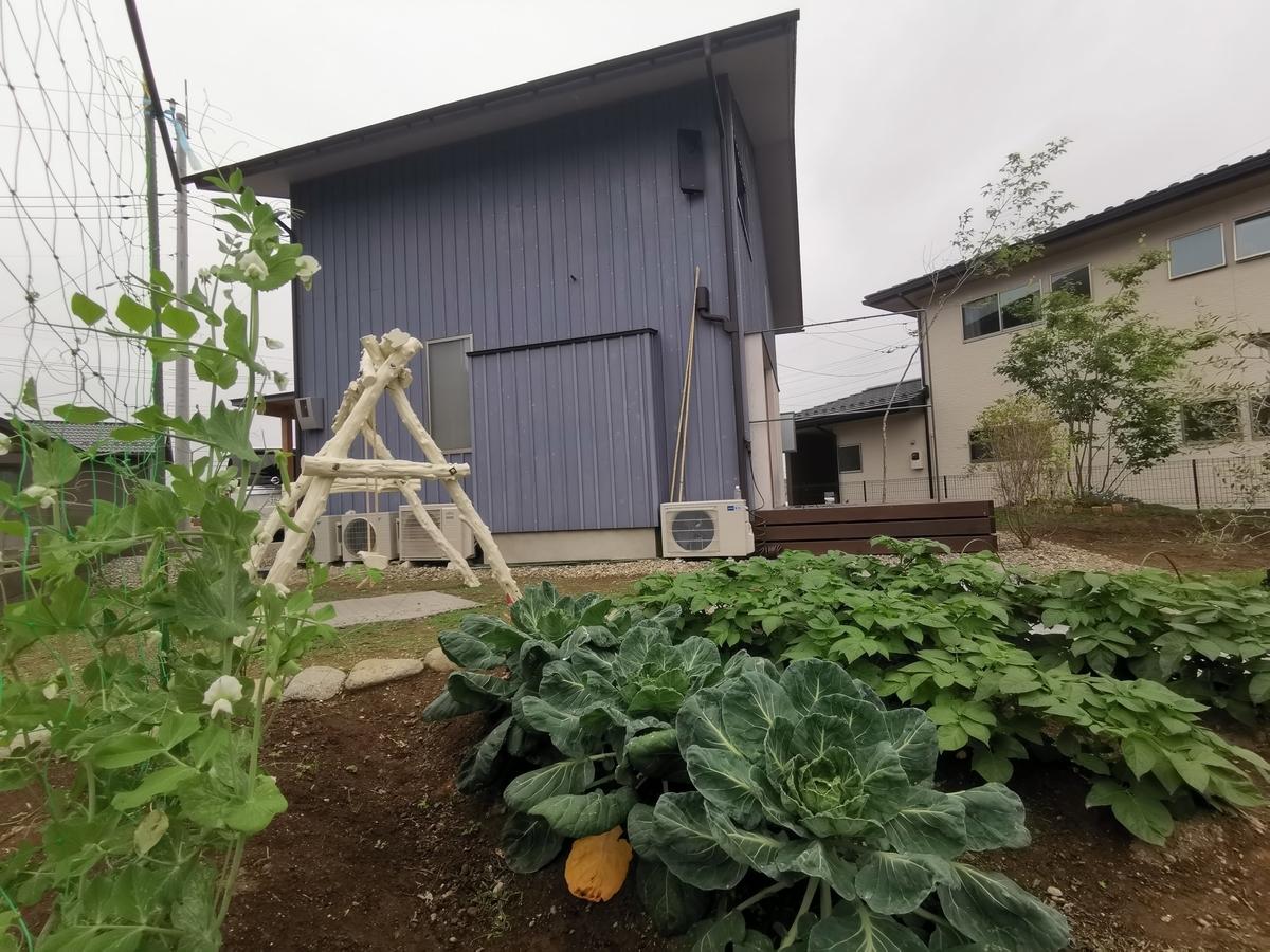 夏野菜の家庭菜園