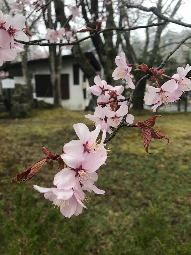 f:id:tobami:20180417160131j:image