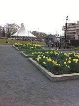 シェンリー・パーク 花壇