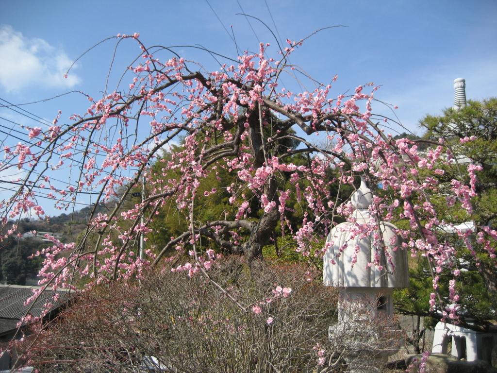 f:id:tobishima-life:20170225124011j:plain