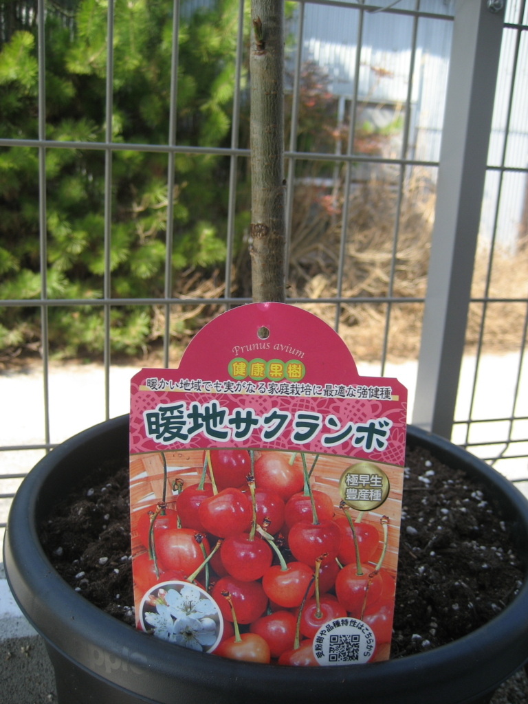 f:id:tobishima-life:20180307141759j:plain