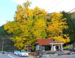 f:id:tobishima-life:20181114110810j:plain