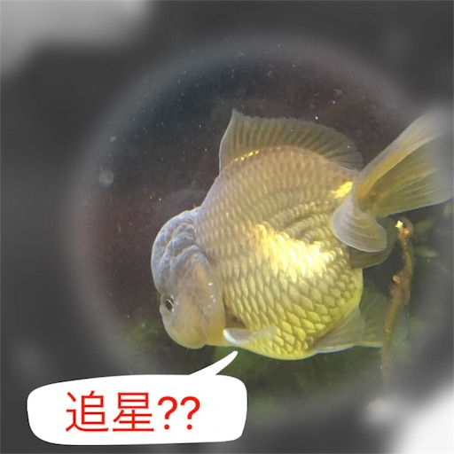 f:id:tochamaru:20170330104409j:image