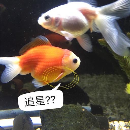 f:id:tochamaru:20170330104422j:image