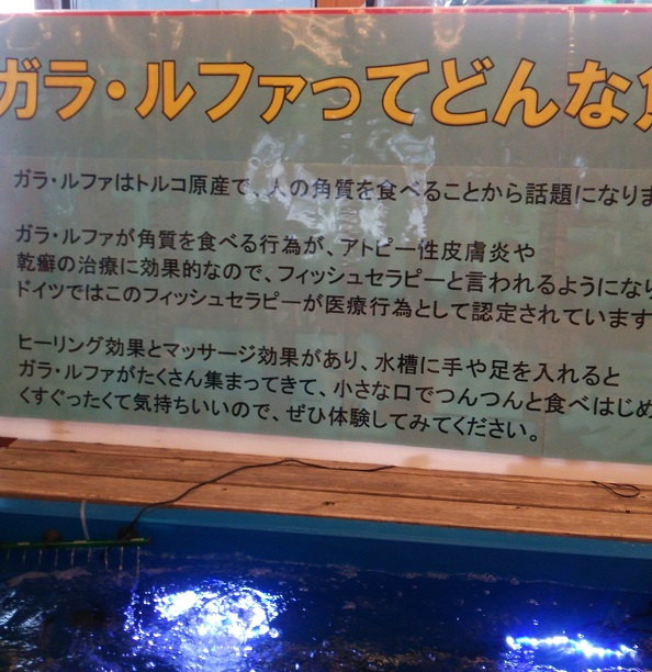f:id:tochigihonkatsu:20160707045140j:plain