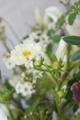 八重咲きのコスモス、ダブルホワイトクイック
