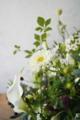 カラー、八重咲きのコスモス