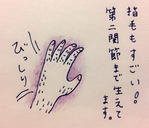 f:id:tocotocokumachan:20170622222041j:plain